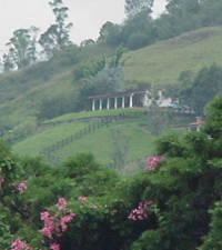 Paisajes Andinos Venezuela Tuya