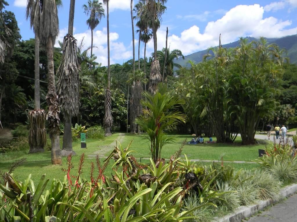 Jard n bot nico de caracas venezuela tuya for Informacion sobre el jardin botanico